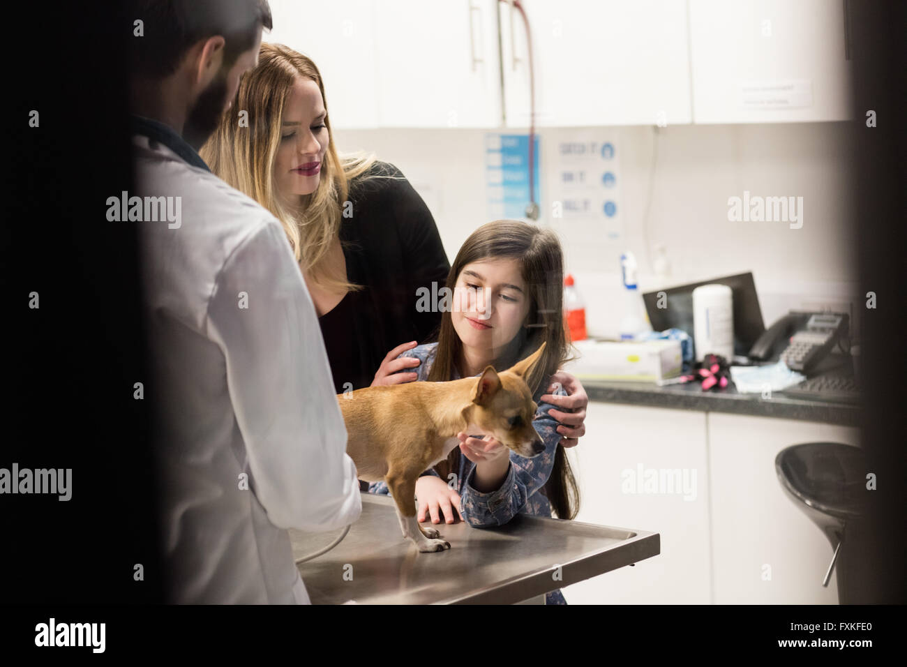 Vet examining a dog with its owner - Stock Image