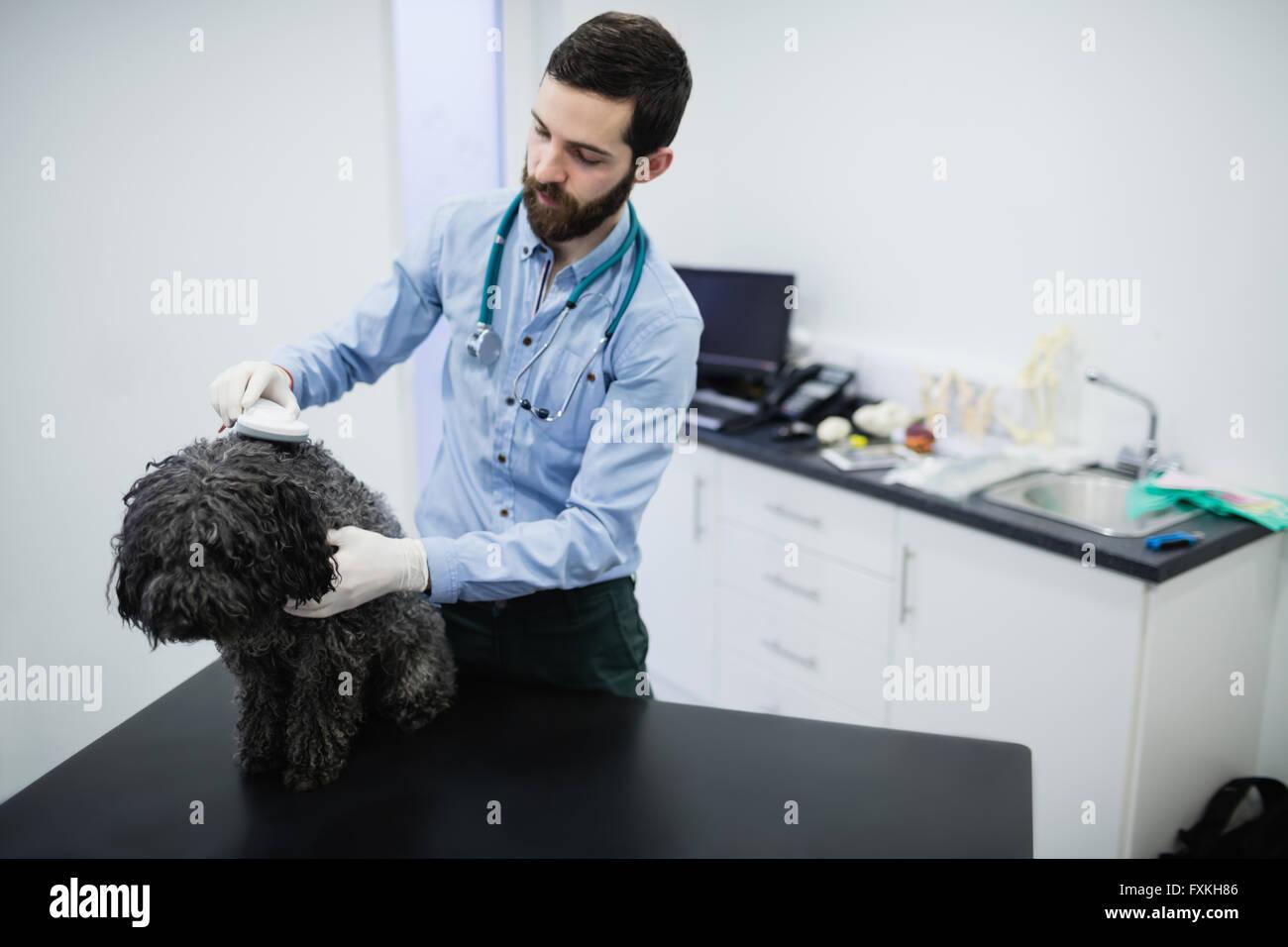 Vet examining dog - Stock Image