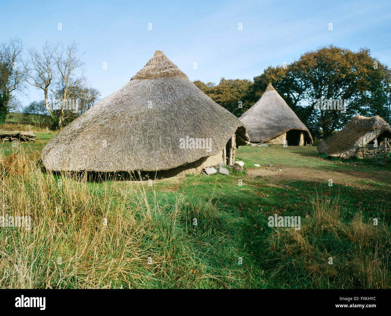 Reconstructed roundhouses 2 & 1 at Castell Henllys defended settlement, Pembrokeshire, occupied during Late - Stock Image