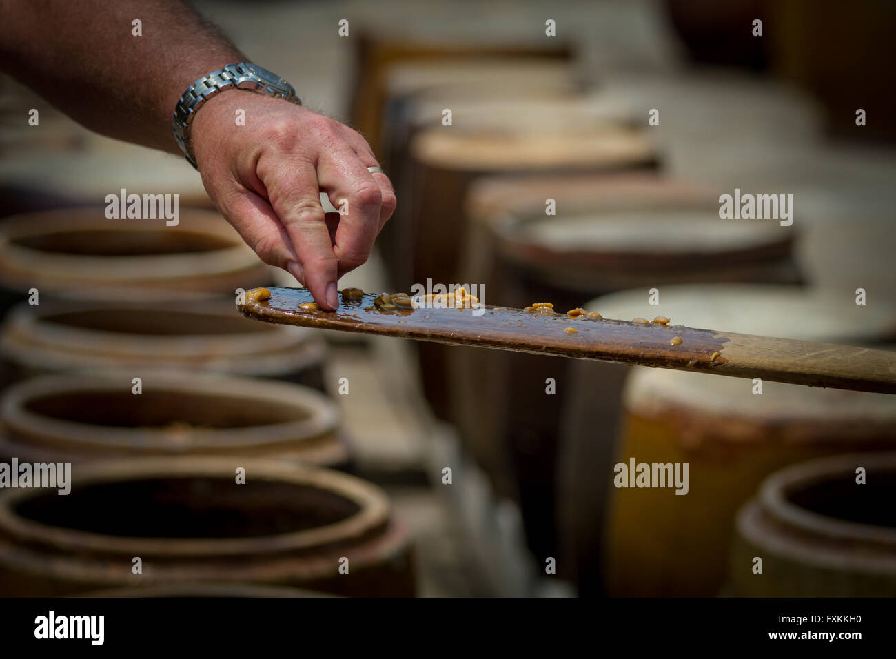 Westerner trying soy beans in the process of fermentation into soy sauce; Mekong Delta, Vietnam - Stock Image
