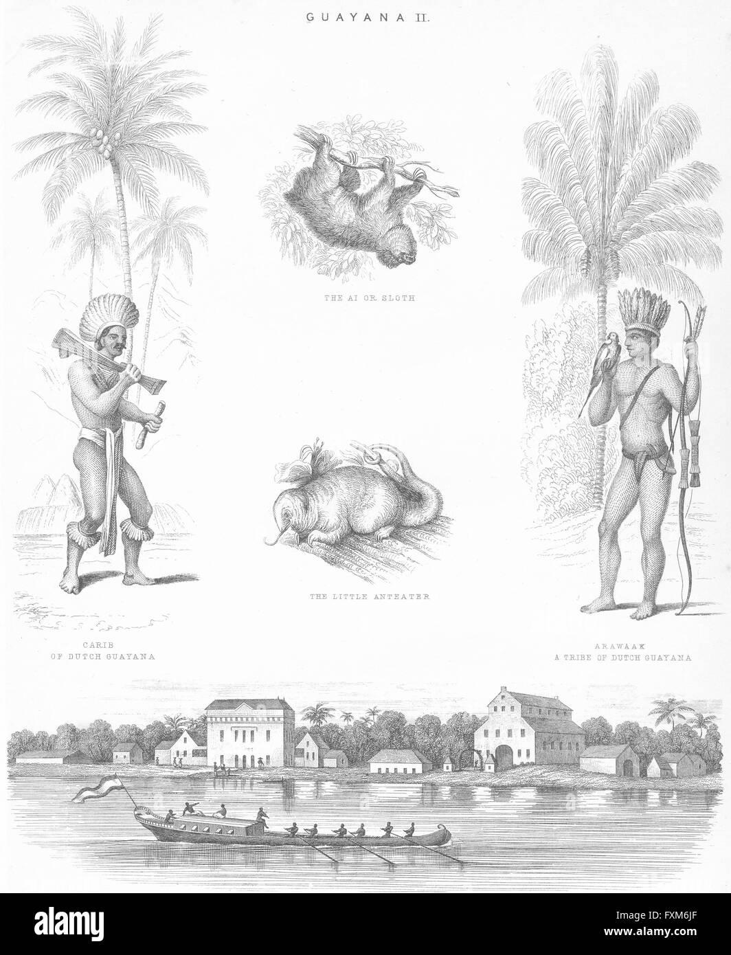 SURINAME: Carib; Arawak; cocoa Alkmaar Commewijne, antique print c1849 - Stock Image
