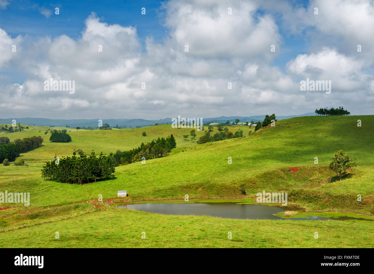 Green hills are typical for the scenery of the Atherton Tableland. - Stock Image