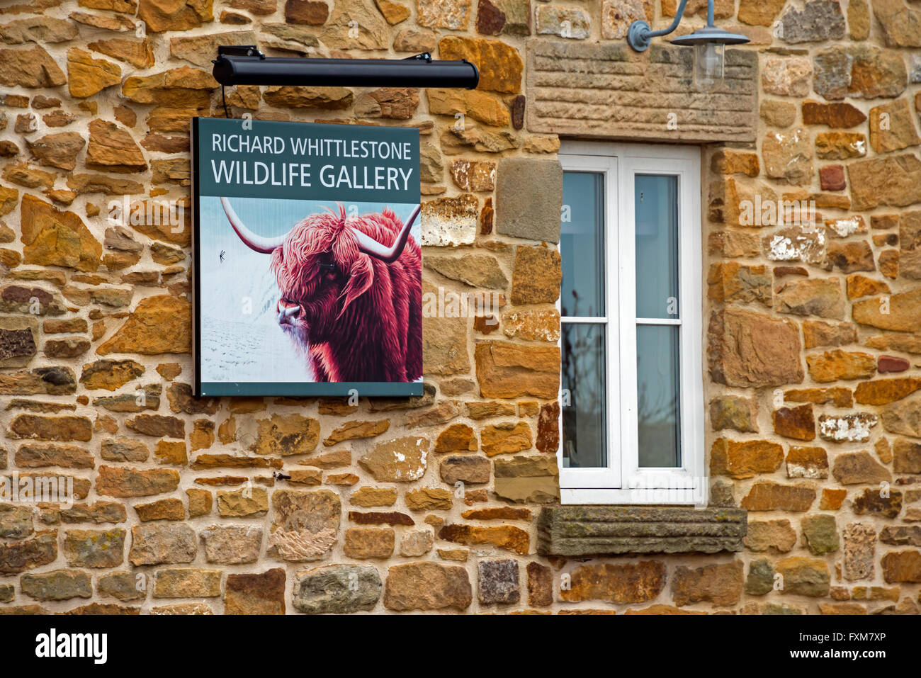 Richard Whittlestone Wildlife Gallery, Pilsley, Derbyshire - Stock Image