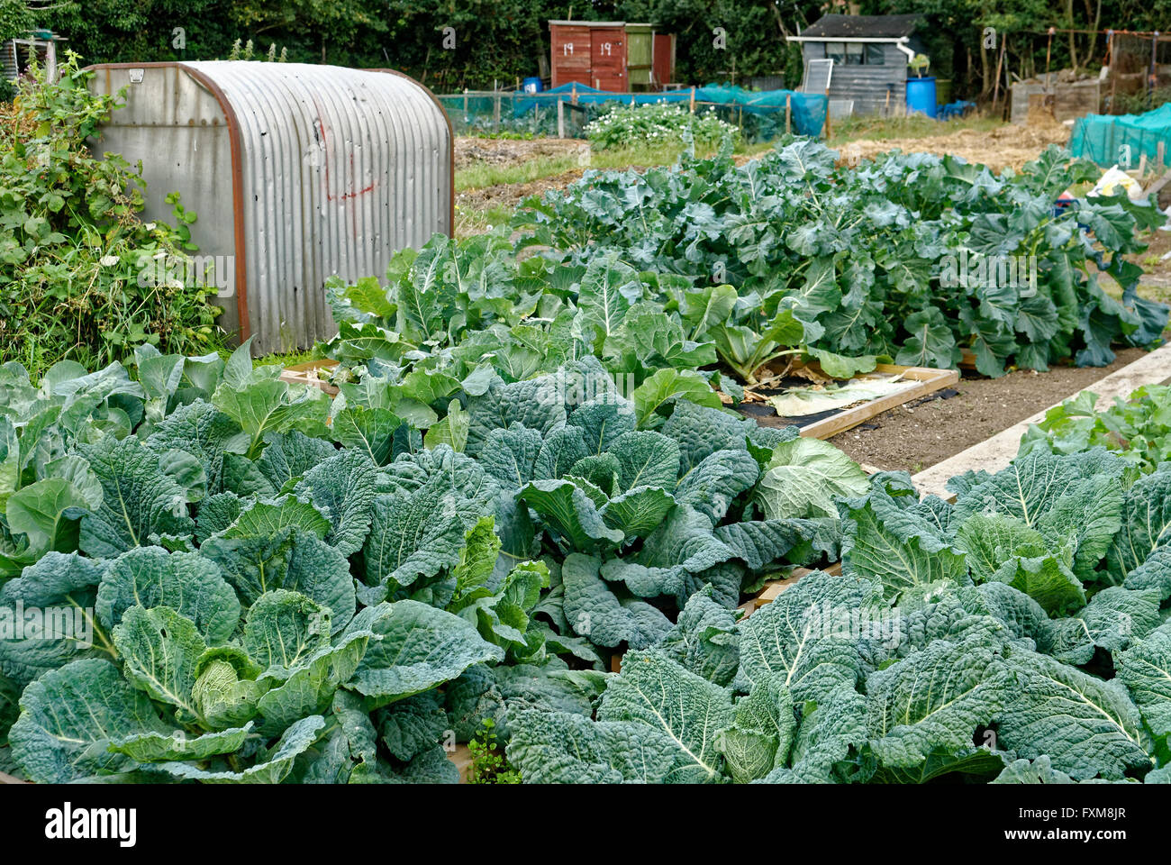 Allotment Gardening Fruit Vegetables Home Grown Agriculture Stock