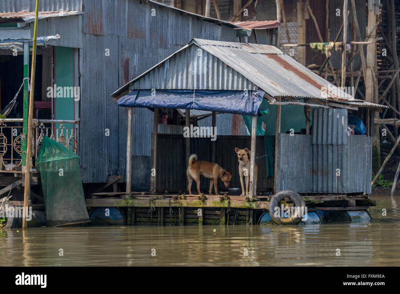Floating kennel with two dogs on part of the Chau Doc floating village, Mekong Delta, Vietnam - Stock Image