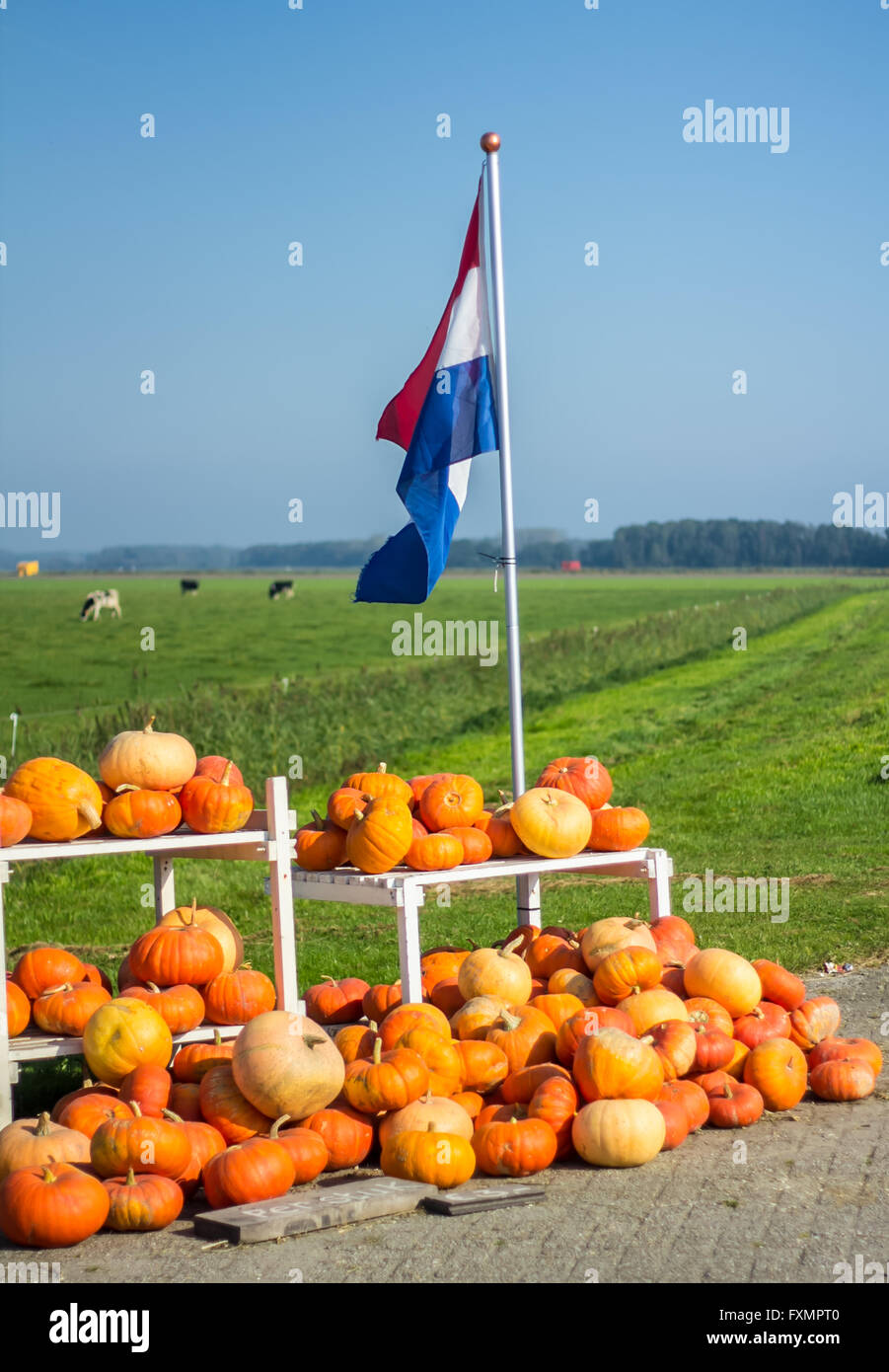 Flevoland, the Netherlands - October 2, 2011: pumpkins for sale in the  countryside