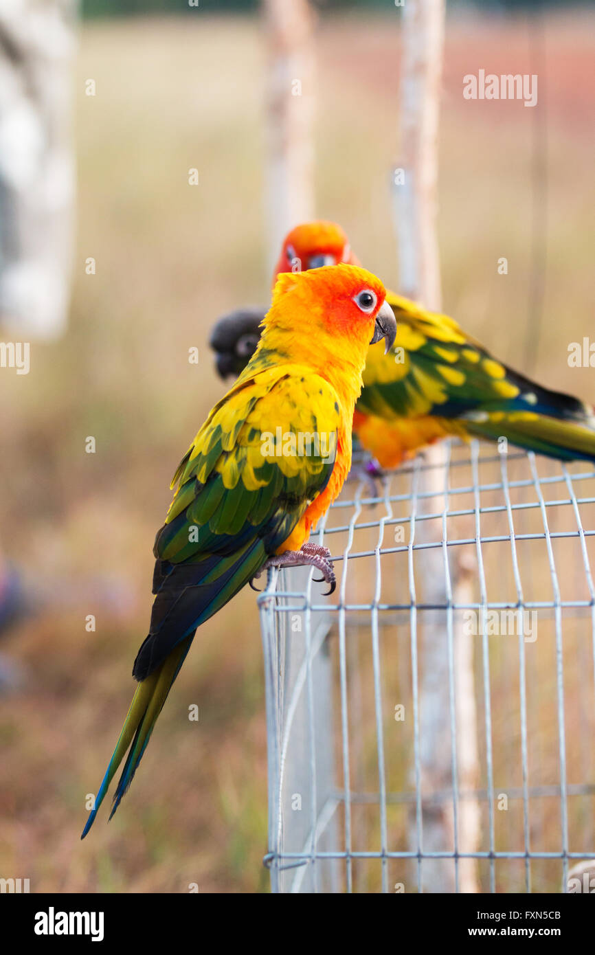 Parrot training. And let live independently Stock Photo