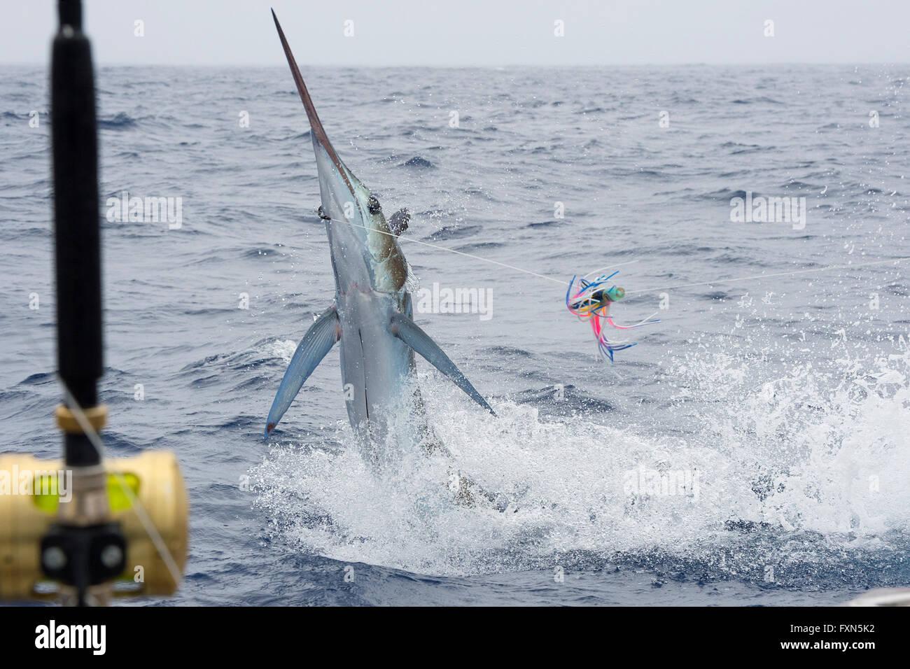 blue marlin hook up