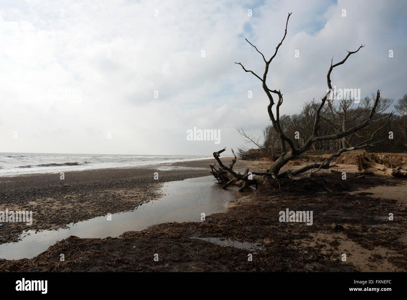 Coastal erosion Benacre Suffolk England - Stock Image