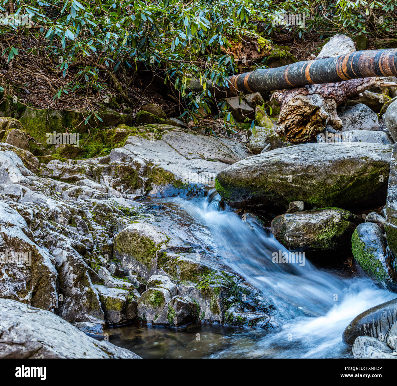 Lower Section of Grotto Falls. - Stock Image