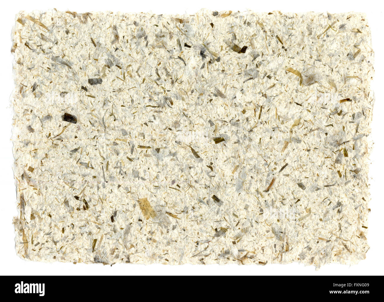 Sheet of handmade paper with plant fiber - Stock Image