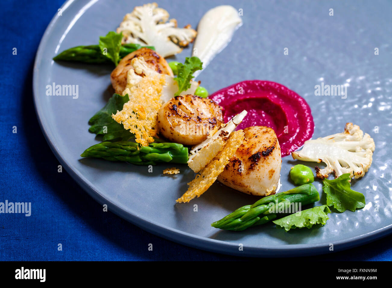 Scallops with beetroot and cauliflower puree, asparagus and parmesan crisp - Stock Image