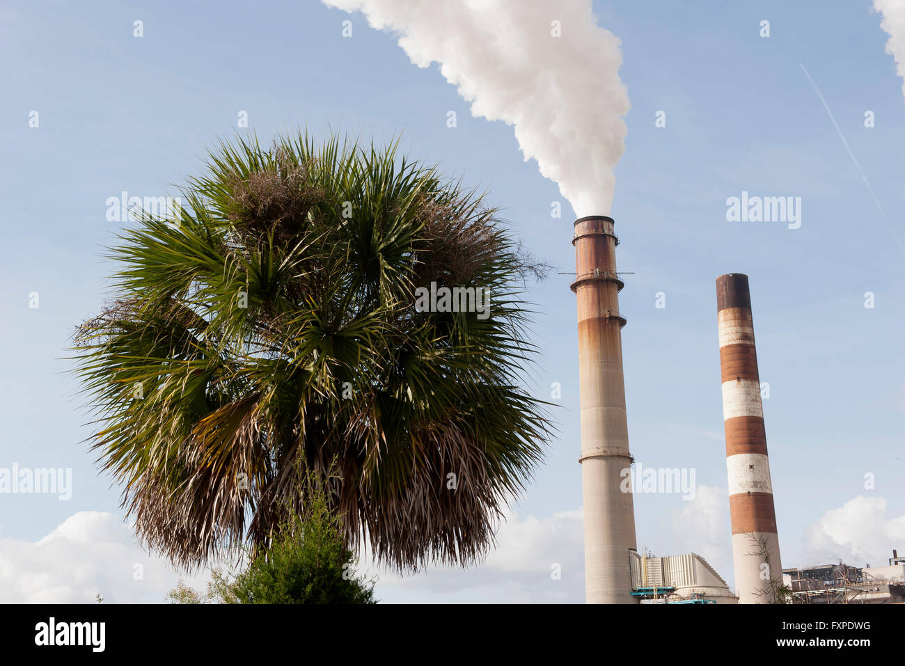 Smokestacks emitting fumes near palm tree - Stock Image