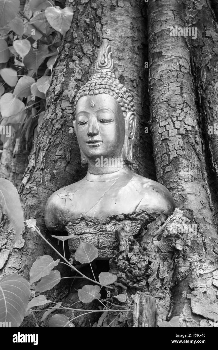 Buddha in the  Bodhi Tree head White-black Stock Photo
