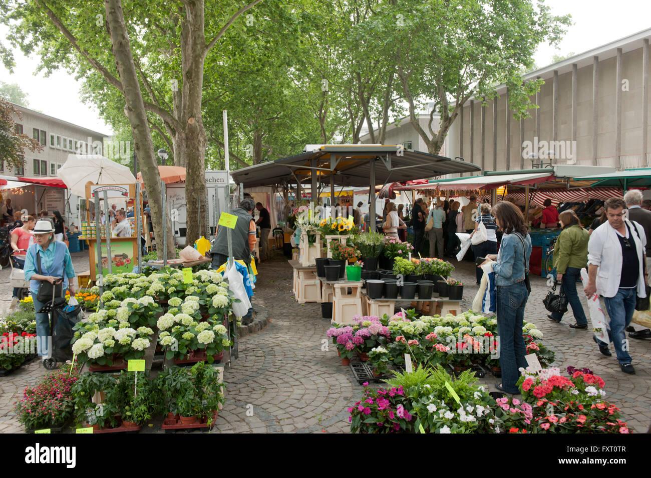 Deutschland, Nordrhein-Westfalen, Köln-Inenstadt, Mittelstrasse, Wochenmarkt an St. Aposteln - Stock Image