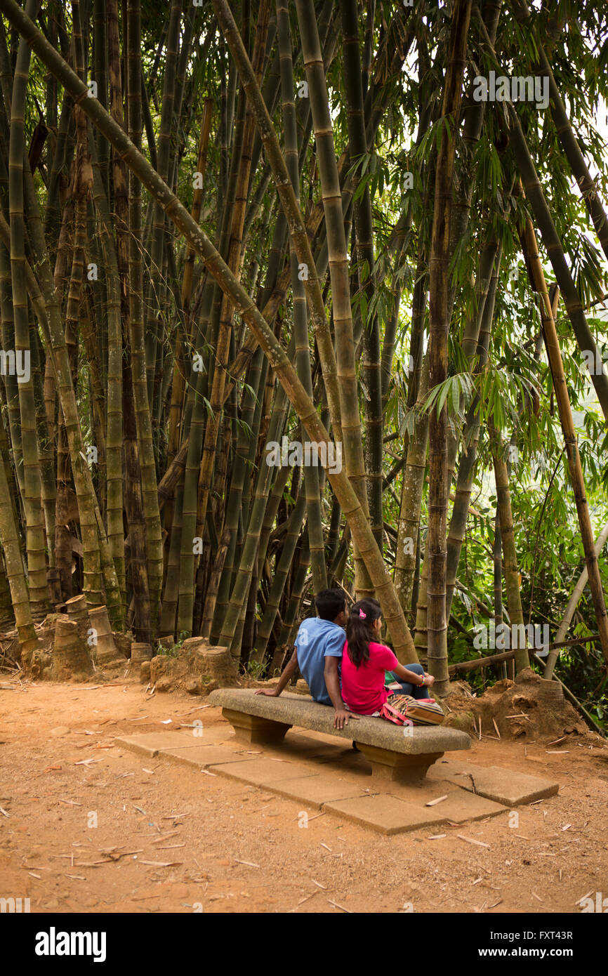 Sri Lanka, Kandy, Peradeniya Botanical Gardens, courting couple, below Giant Bamboo, Dendrocalamus Giganteus - Stock Image
