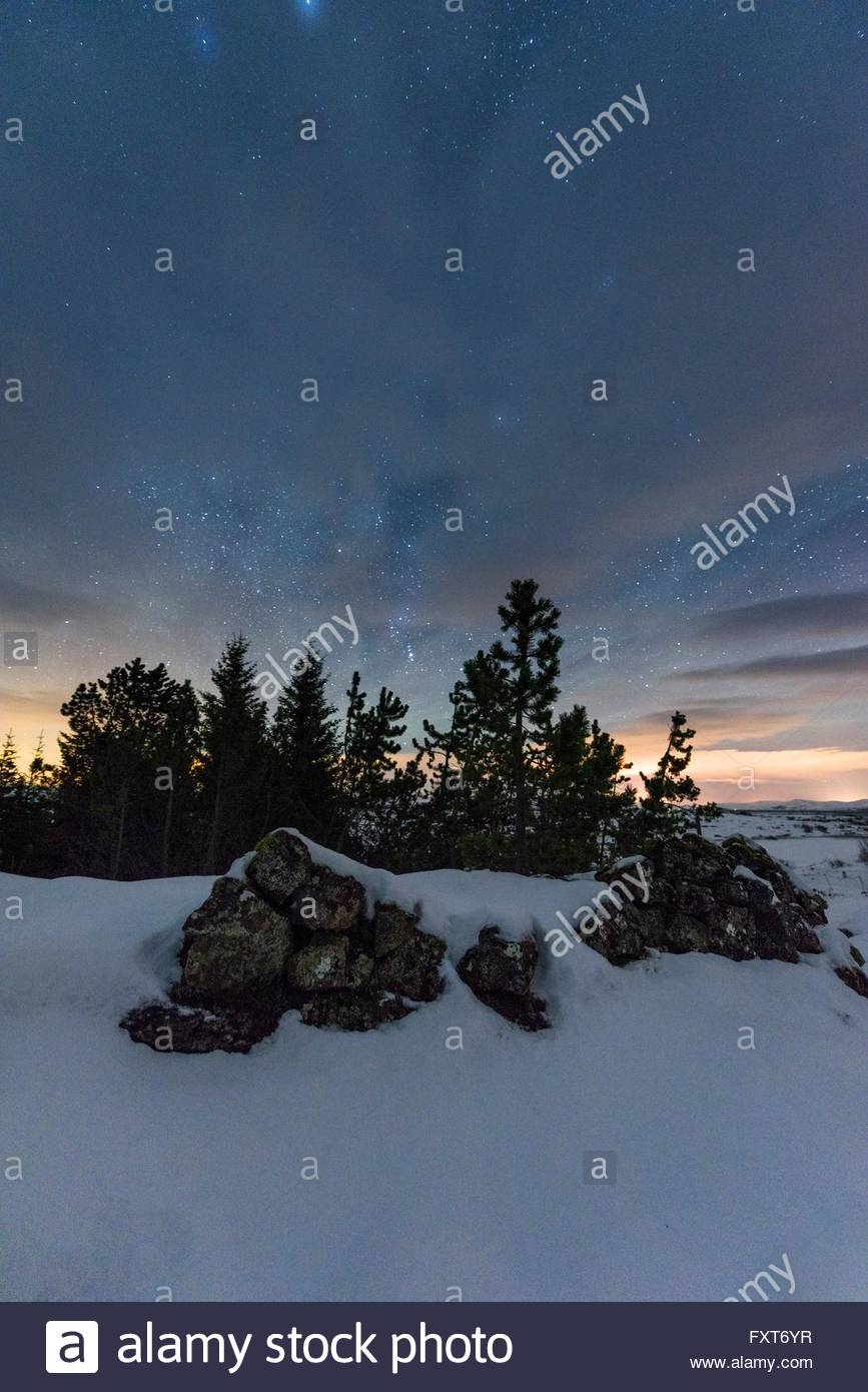 Forest of evergreen trees and stacks of rocks under starry night sky, Thingvellir, Iceland - Stock Image