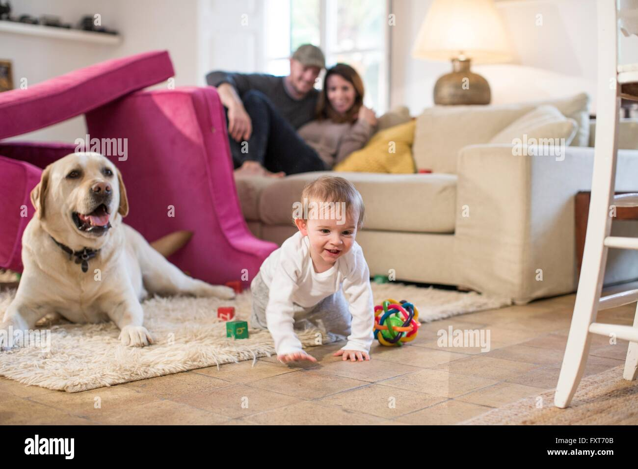 Baby boy and pet dog playing in fort made from sofa cushions - Stock Image