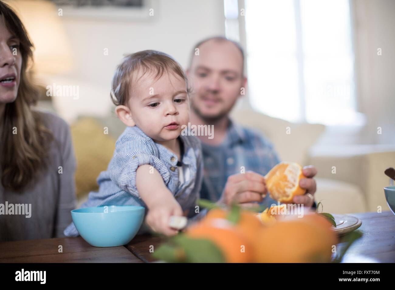 Parents having lunch with baby boy, peeling orange - Stock Image