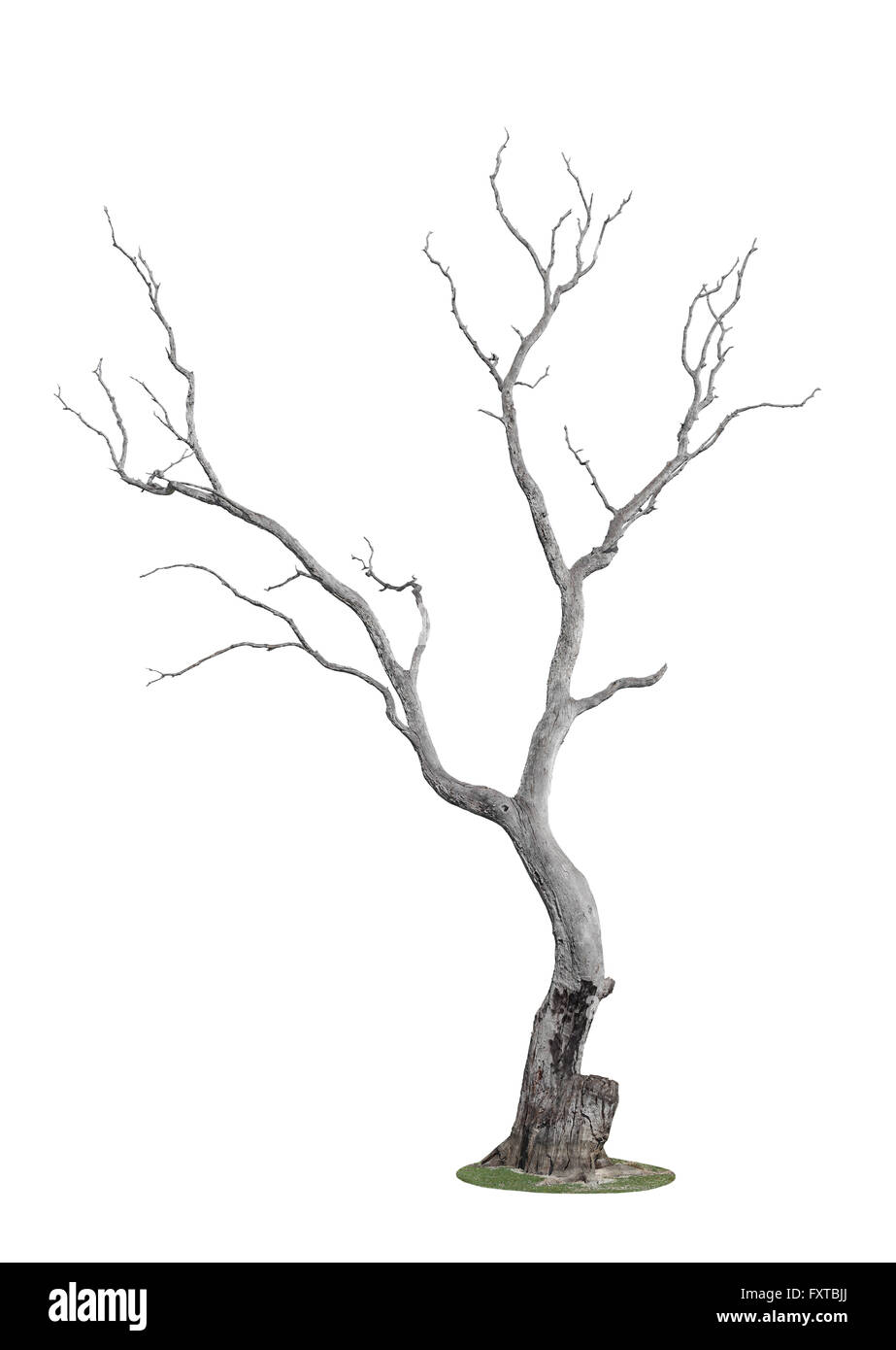 dead tree with trace of fire isolated on white background Stock Photo