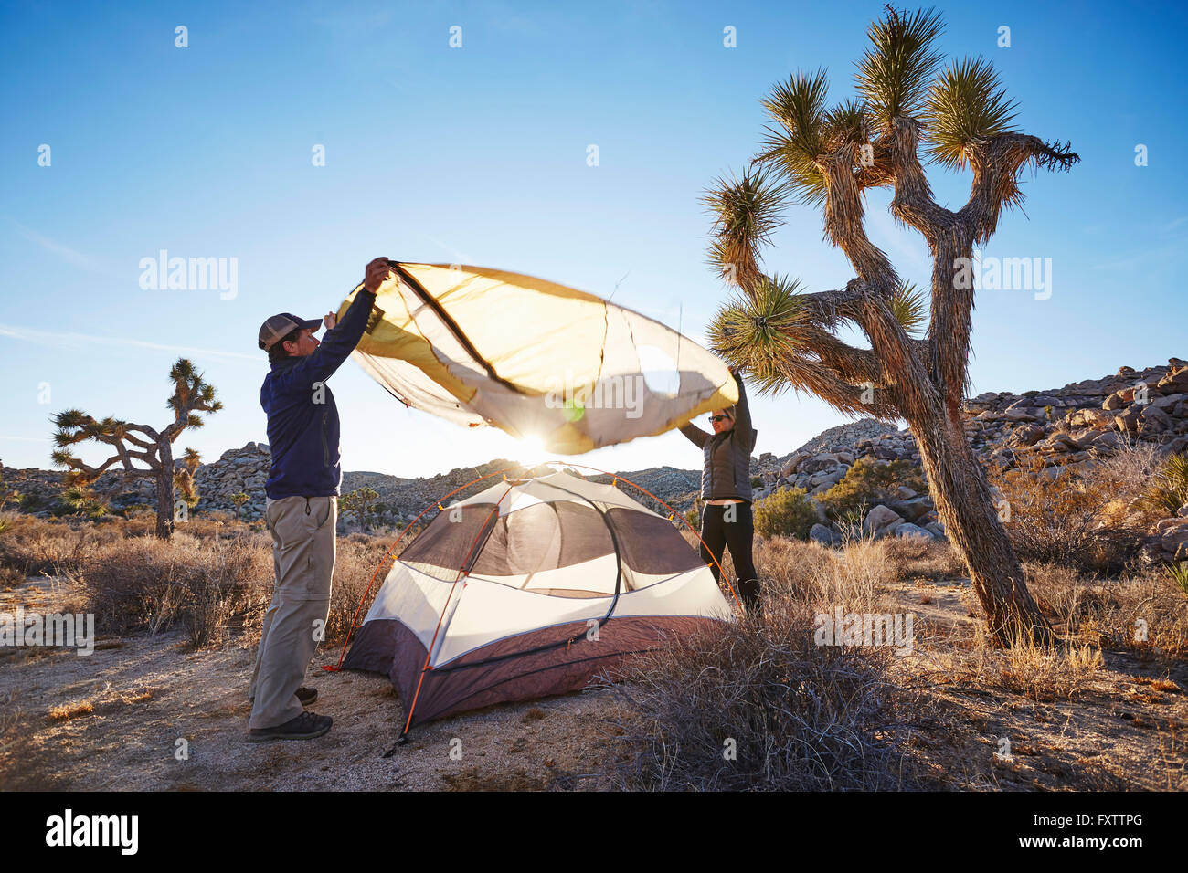 Campers assembling tent, Joshua Tree National Park, California - Stock Image
