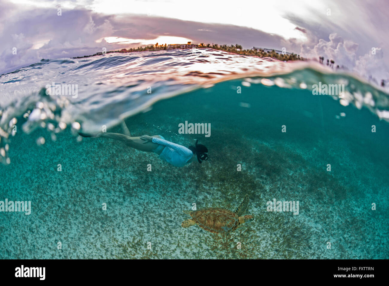 Snorkeler gets close to sea turtle in the shallows of Akumal Bay at sunset, Mexico - Stock Image