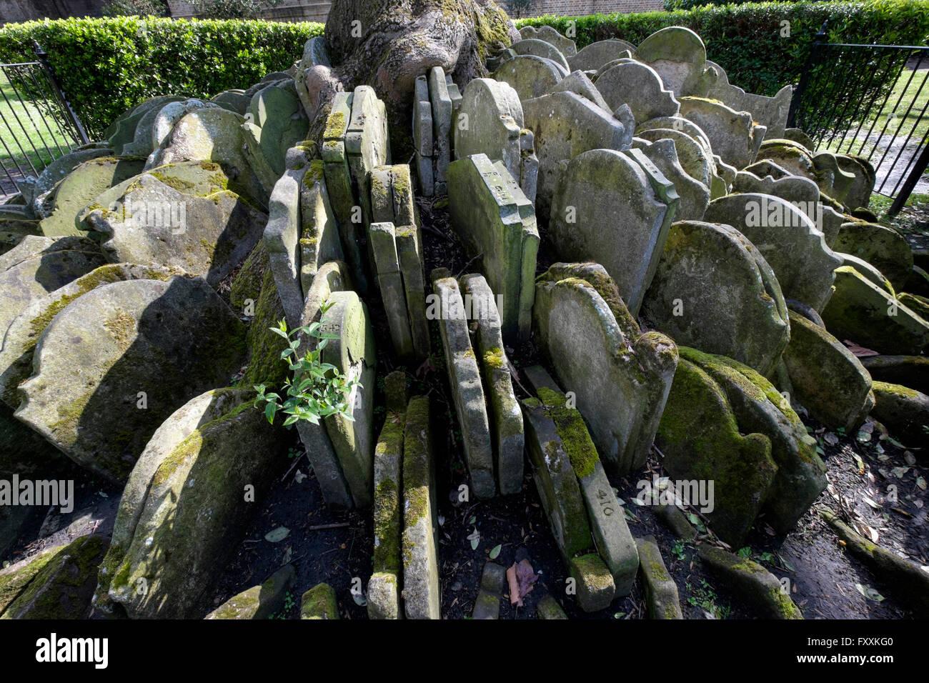 Moss-clad tombstones encircle the Hardy tree, St Pancras Old Church churchyard, London England UK - Stock Image