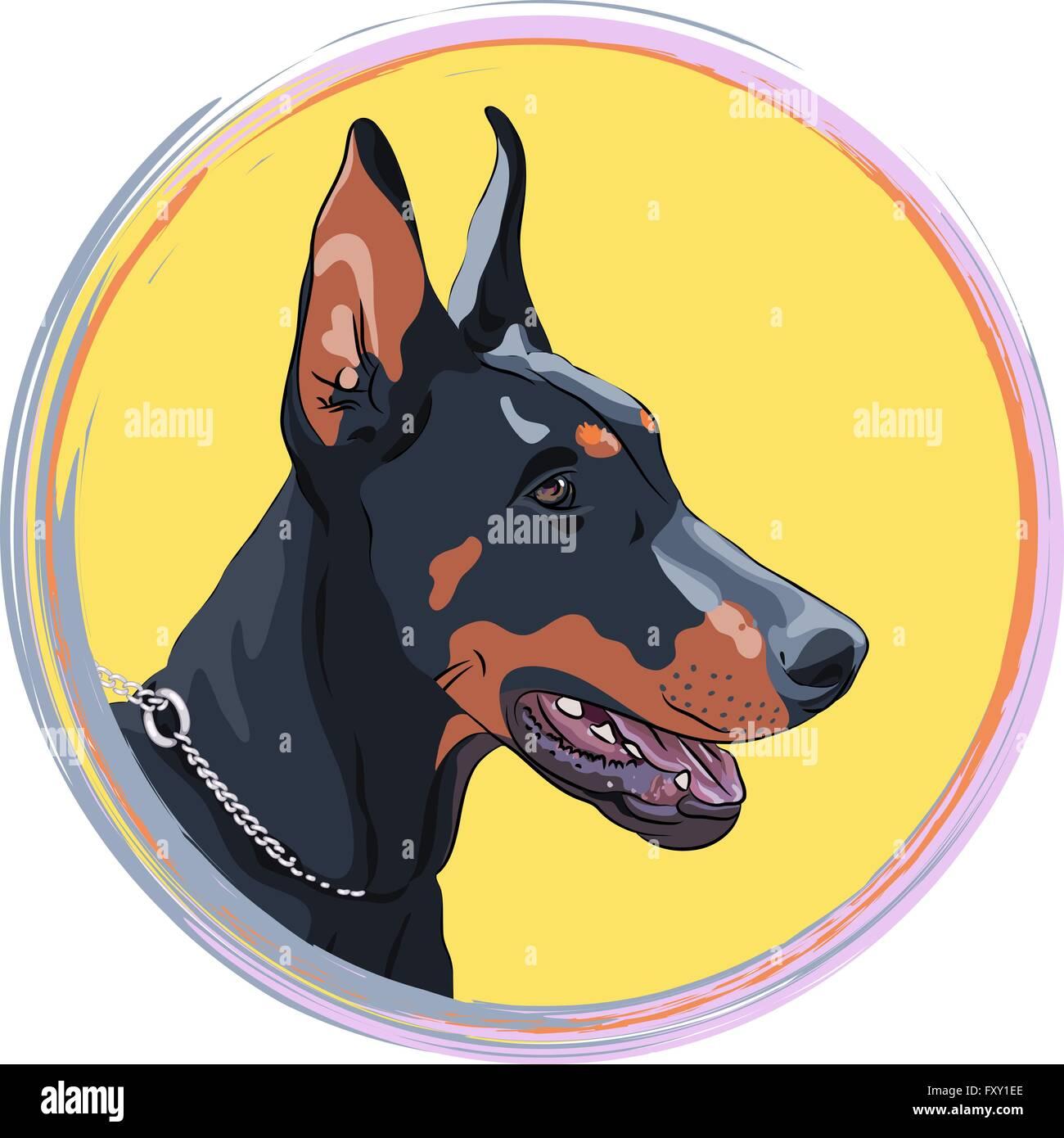 vector closeup serious dog Doberman Pinscher breed - Stock Vector