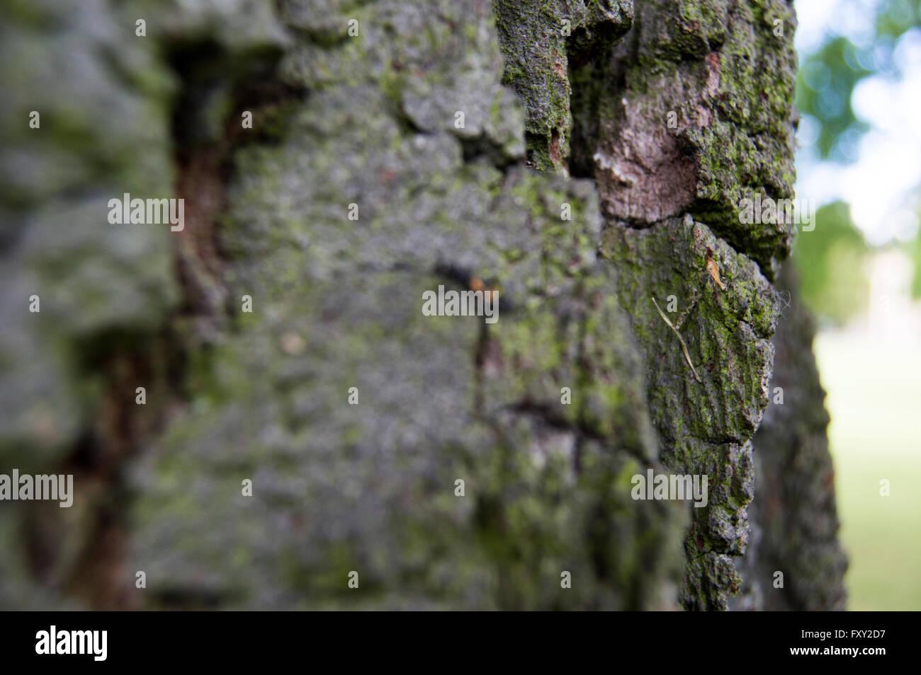 Texture Tree - Stock Image
