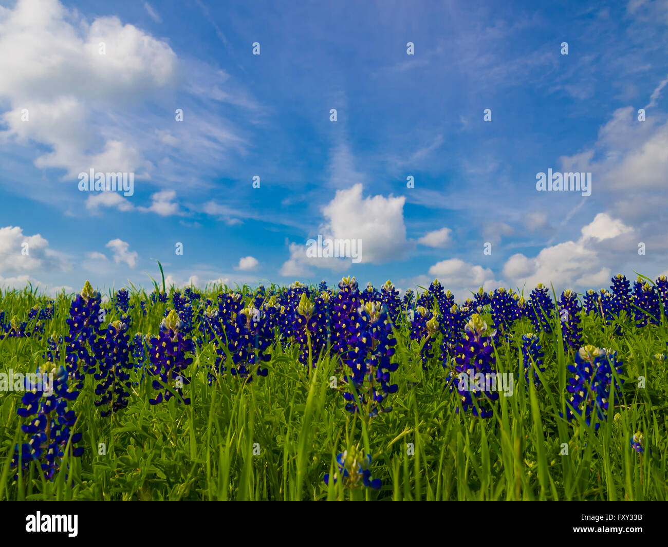 Puffy Flower Stock Photos Puffy Flower Stock Images Alamy