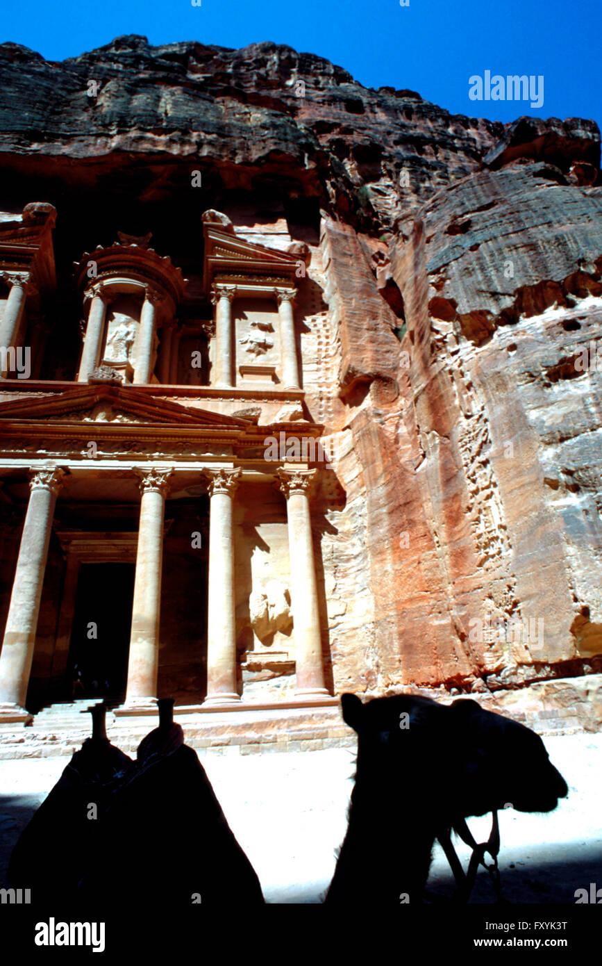 Camel in The Treasury, El Khazneh, Petra, Jordan - Stock Image