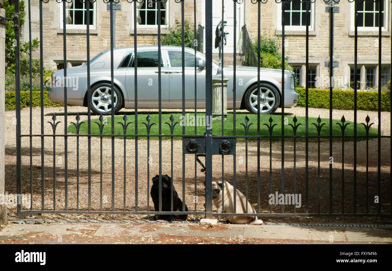 Two Pugs guard the gates of a home - Stock Image