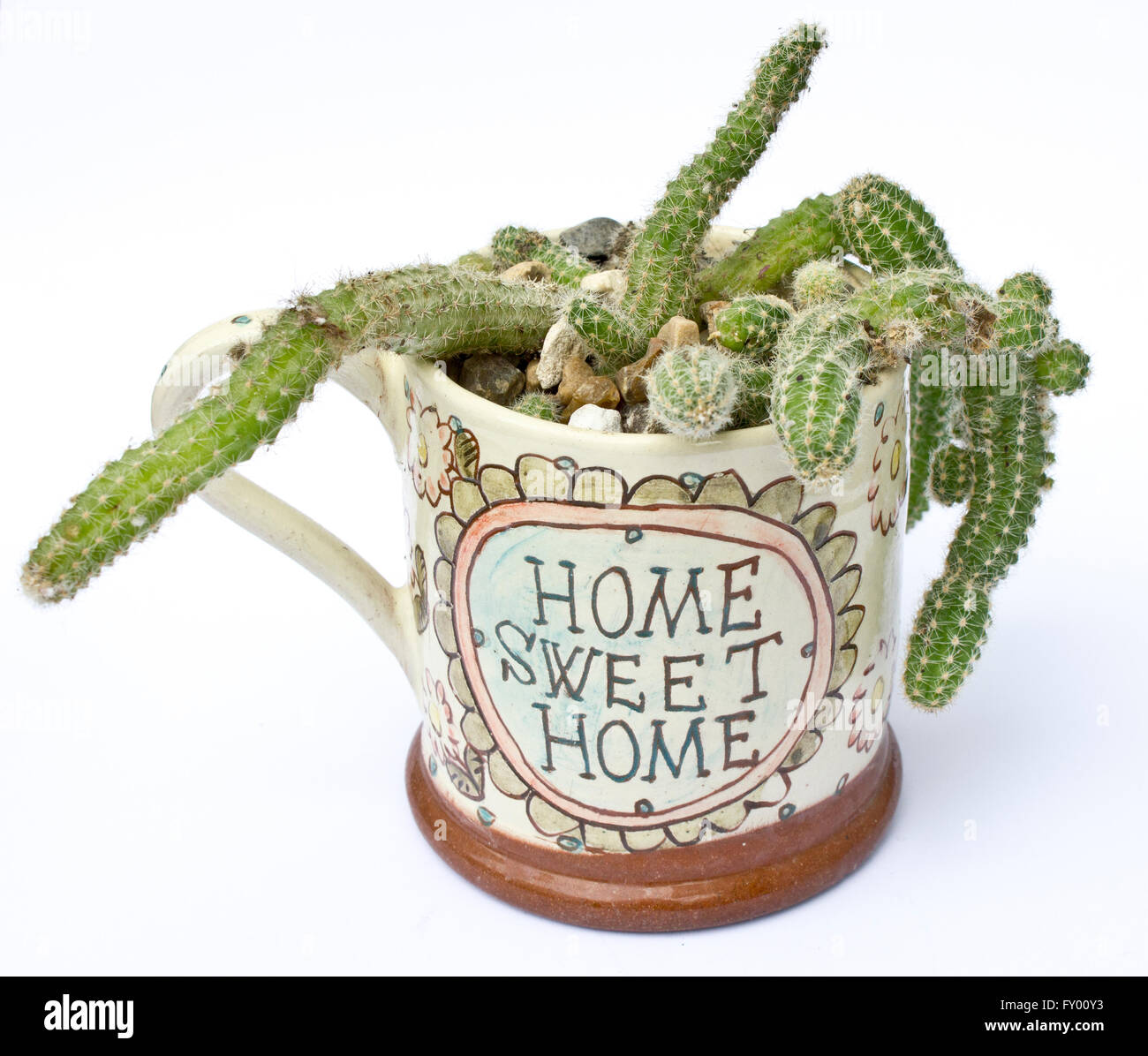 Cactus in Home Sweet Home Cup - Stock Image
