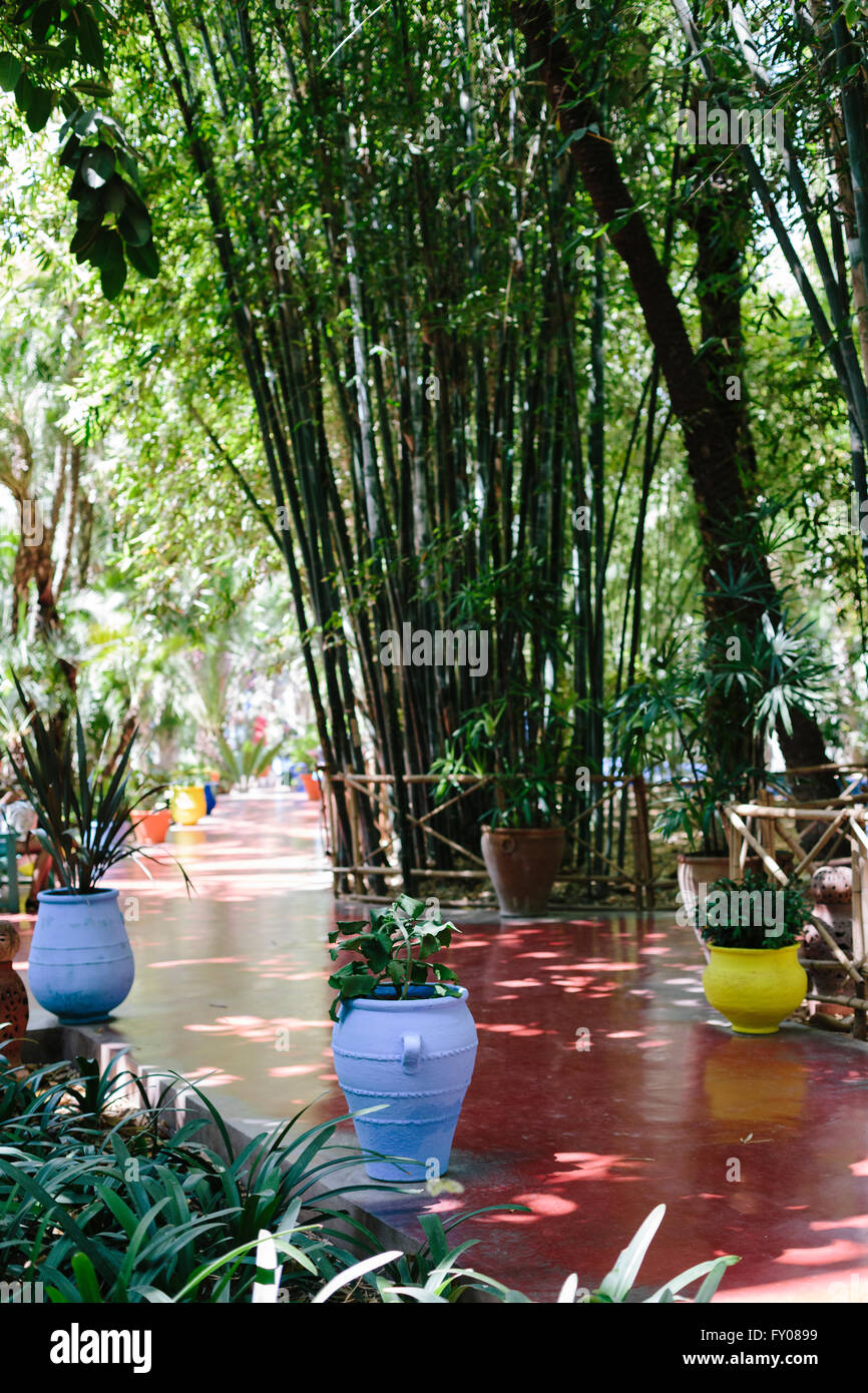 A bamboo lined footpath at Jardin Marjorelle in Marrakech, Morrocco - Stock Image