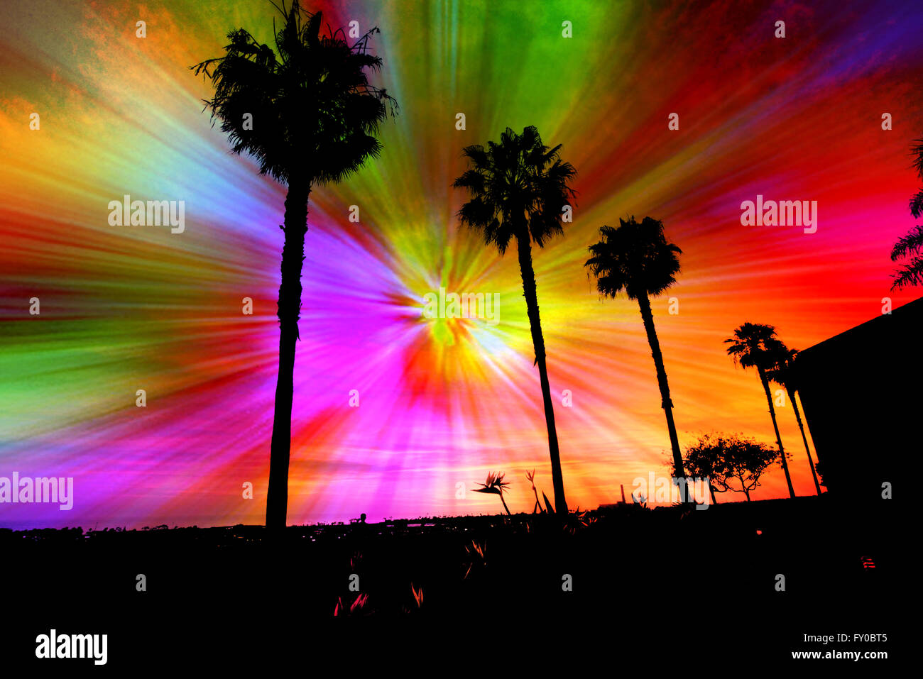 Silhouette of palm trees against a star burst of rainbow colors emanating from a central point. - Stock Image