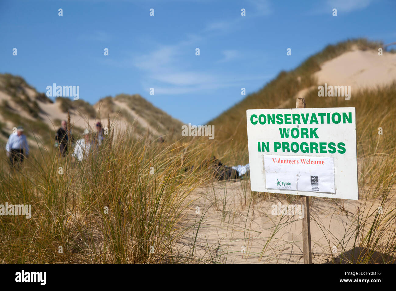 Conservation work underway on the sand dunes of Lytham St Annes. Dune Conservation Work, Blackpool, Lancashire, - Stock Image
