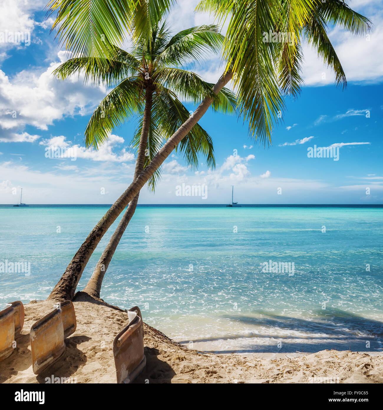 Palm beach in Saona island, Dominican Republic - Stock Image
