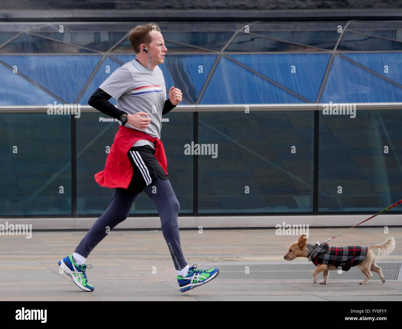 A jogger and a small dog in Greenwich London - Stock Image