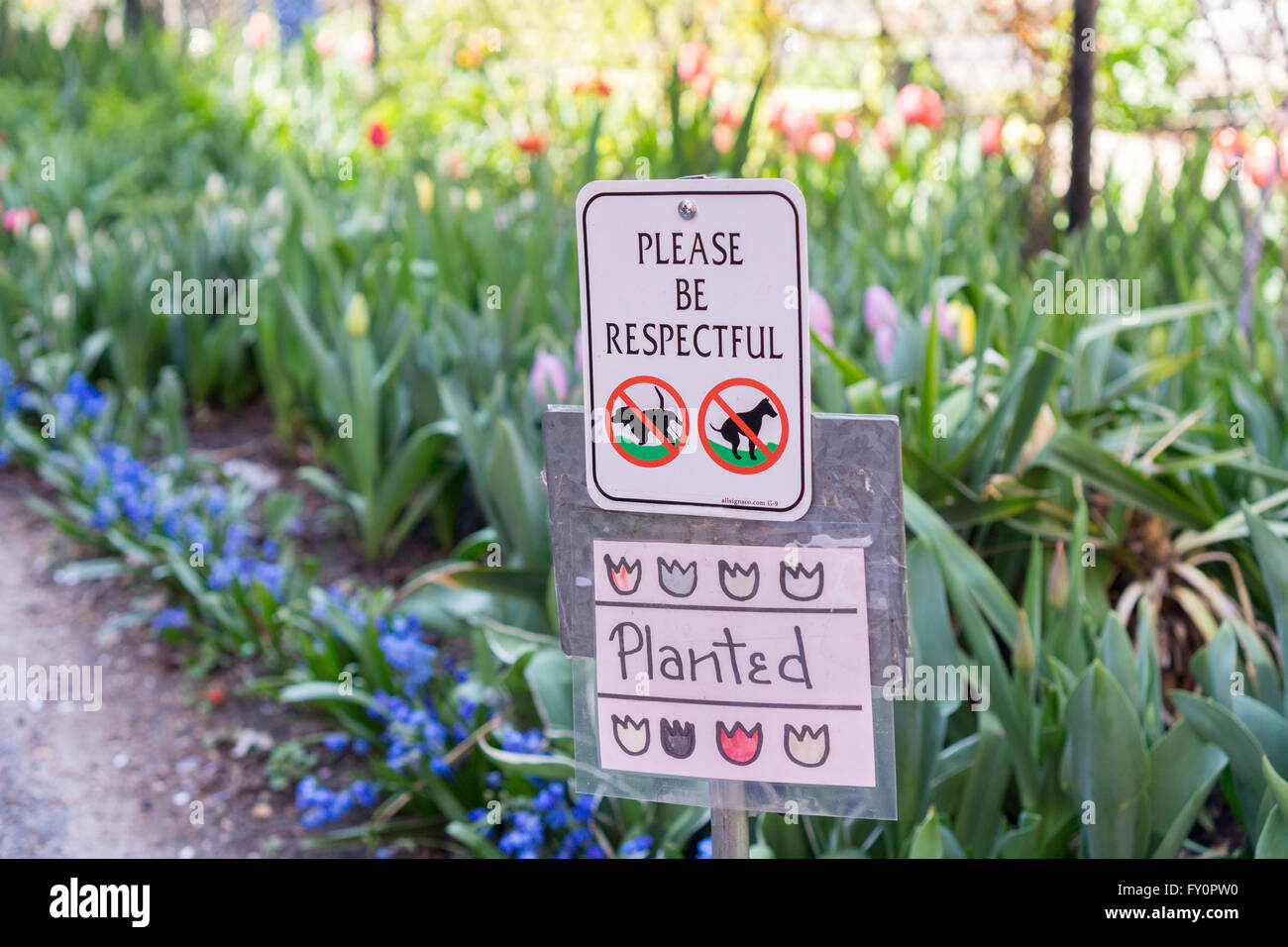 A sign in the West Side Community Garden in New York prohibits dogs from relieving themselves, during their Tulip - Stock Image