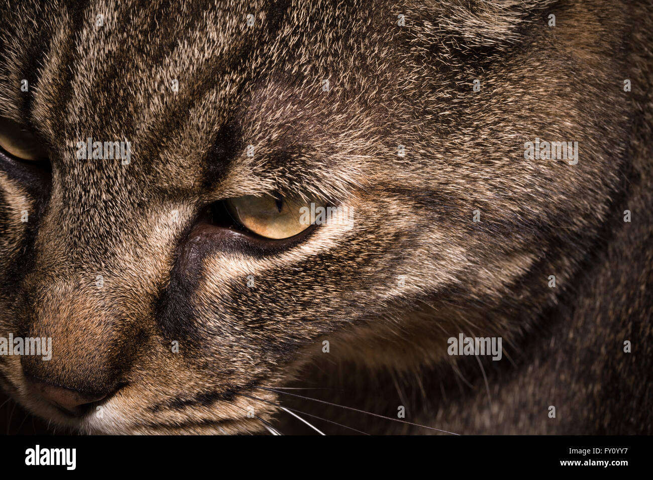 Moment Cat observing - Stock Image