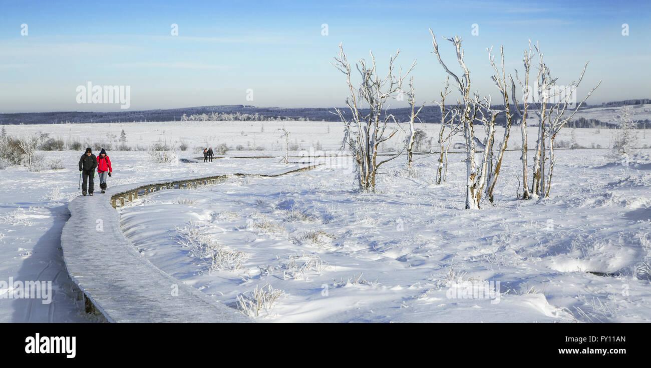 Two walkers walking in the snow in winter at the Hoge Venen / High Fens / Hautes Fagnes, Belgian Ardennes, Belgium - Stock Image