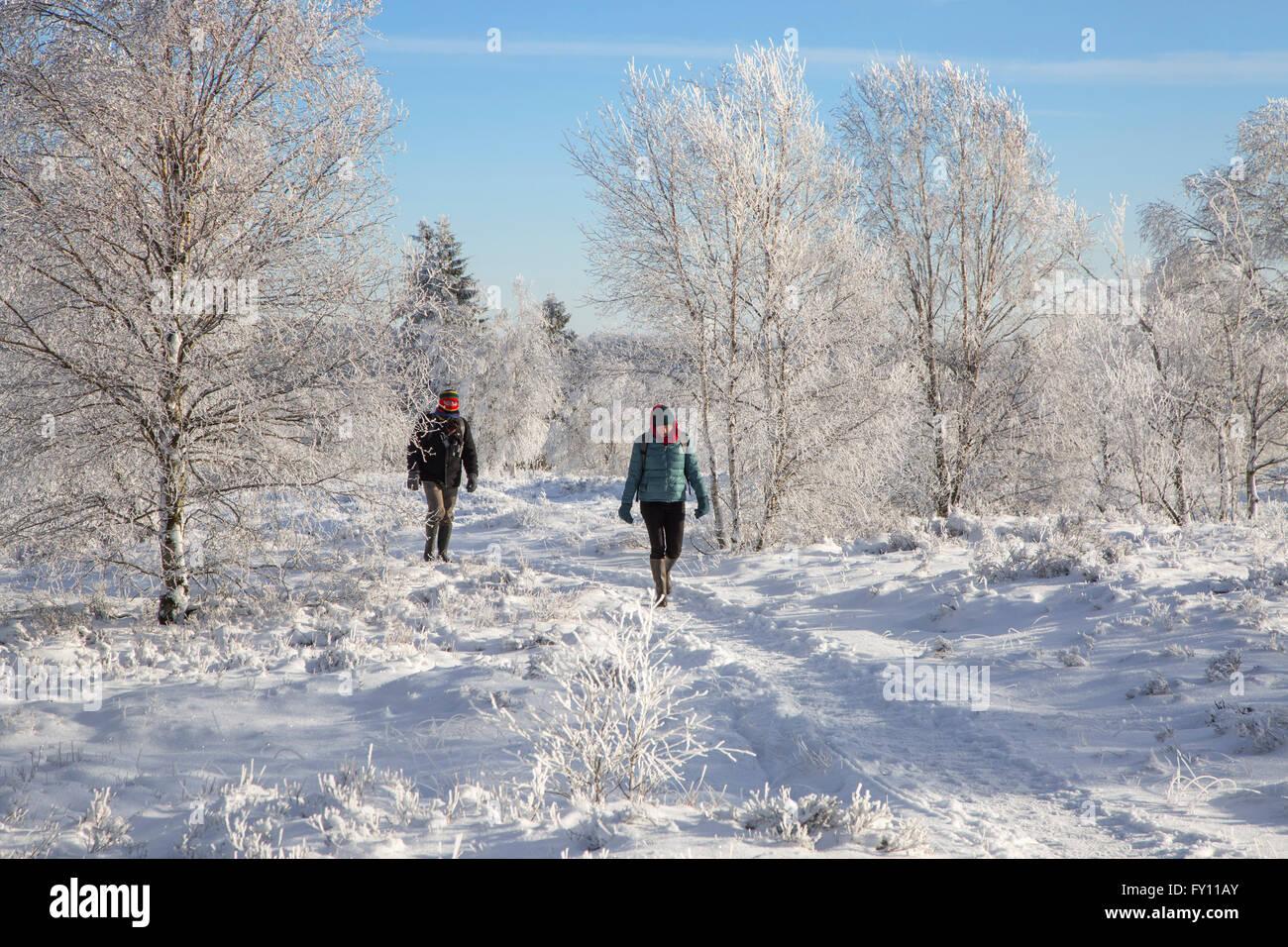 Two walkers walking in the snow in winter at Hoge Venen / High Fens / Hautes Fagnes, Belgian nature reserve in Liège, - Stock Image