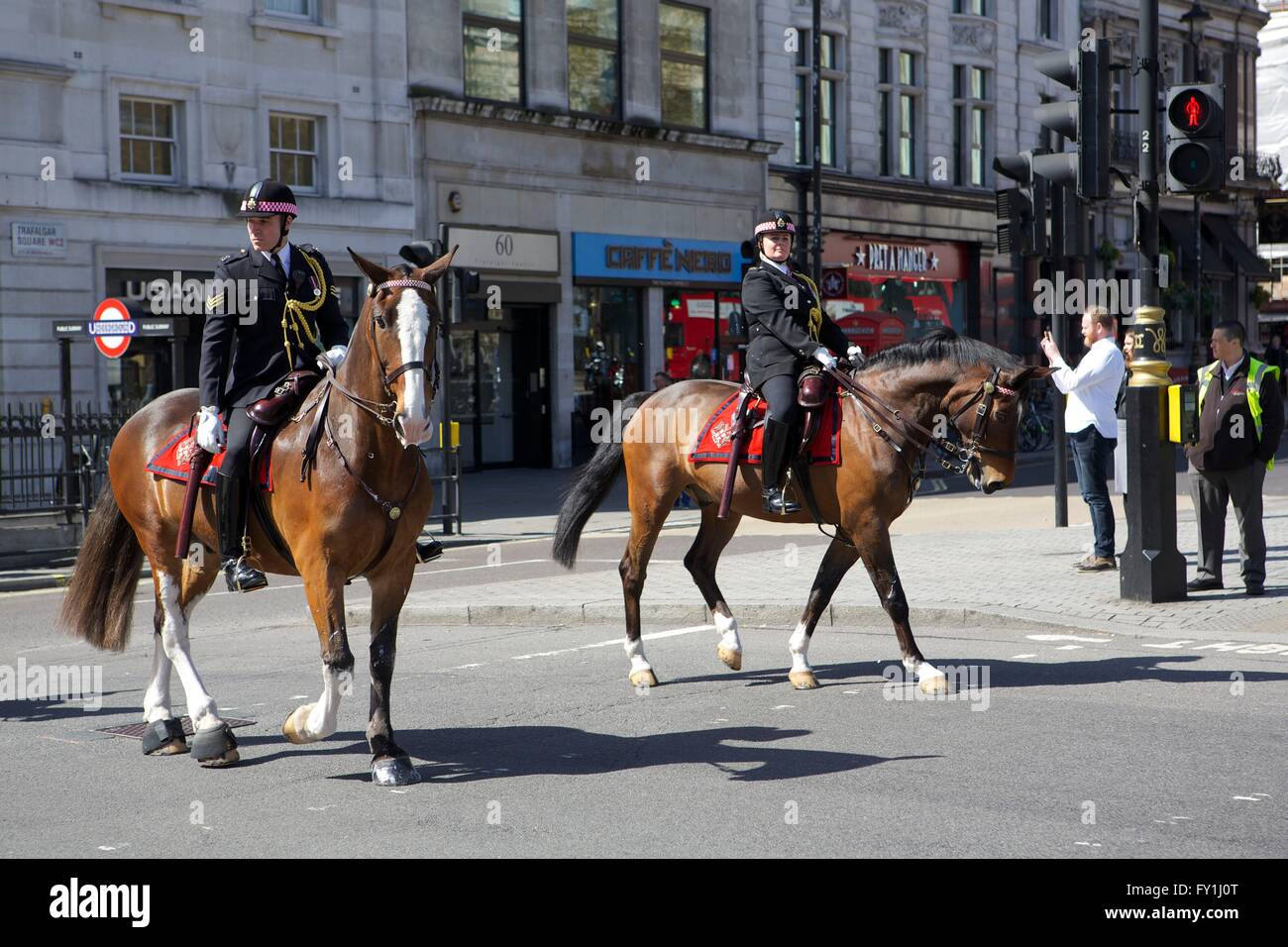 London, United Kingdom. 20 April 2016. The Household Cavalry pass through Trafalgar Square whilst exercising their Stock Photo
