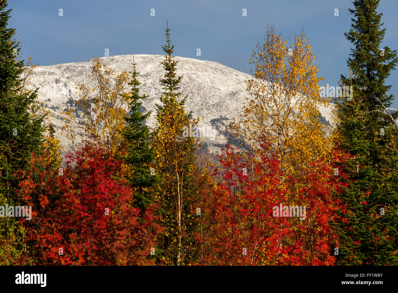 Autumn colored trees and mountain peak in first snow in Sheregesh, Siberia, Russia - Stock Image