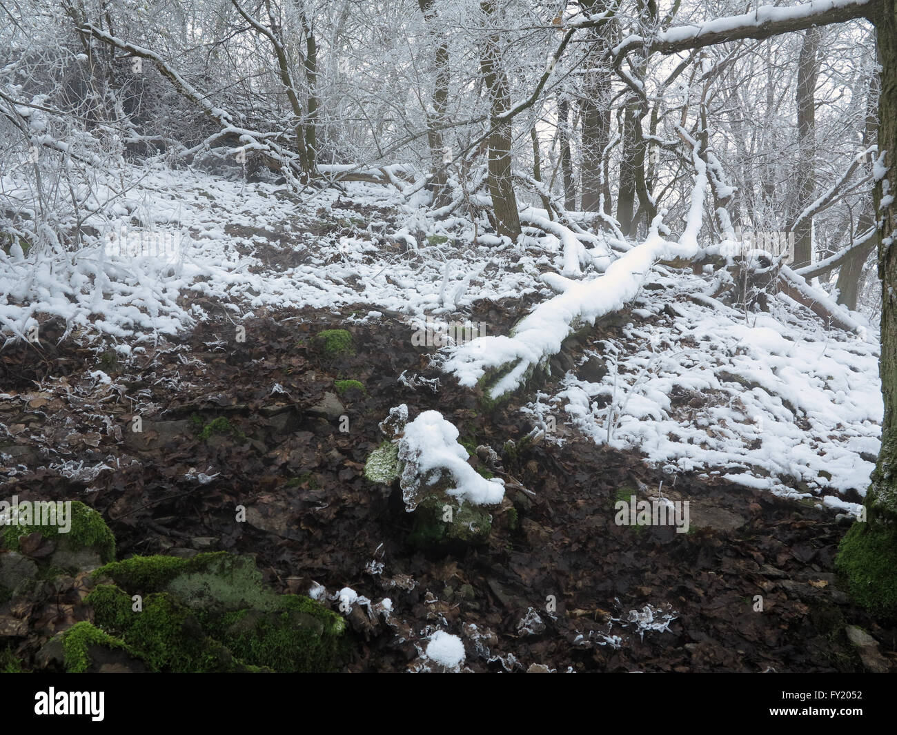 Boreč hill - natural interest in the Czech Cental Mountains Stock Photo