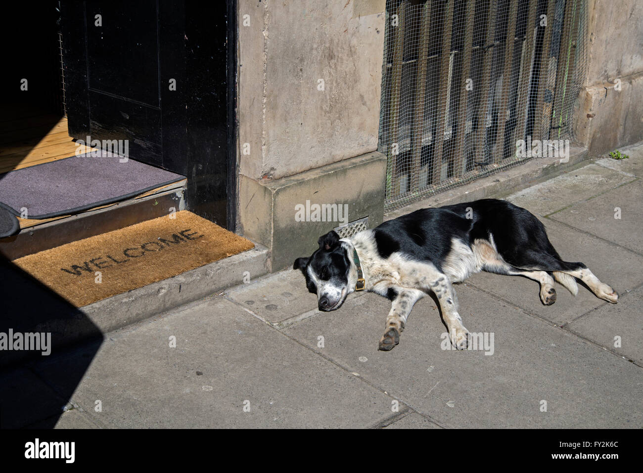 Black and white mongrel dog sleeping in the sun. - Stock Image