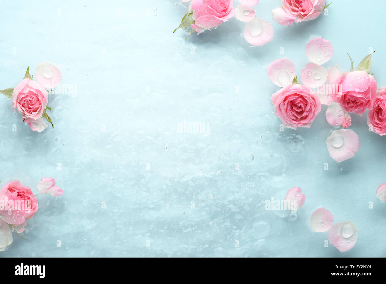 rose in water spa background stock photo 102708680 alamy