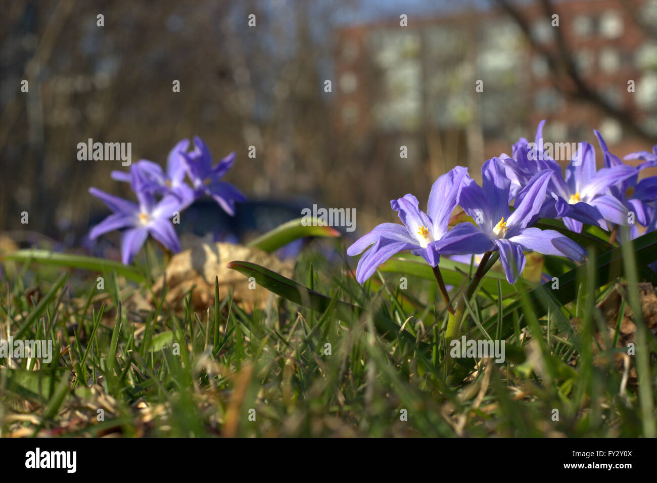 Wild Spring Flowers On The Grass In Helsinki Finland Stock Photo