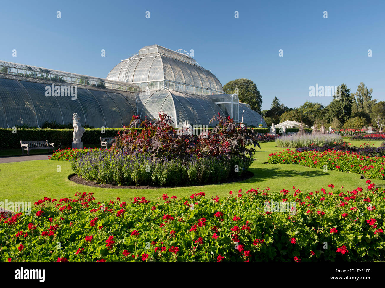 Geraniums on the parterre in front of the Palm House at Kew Gardens, London, UK - Stock Image