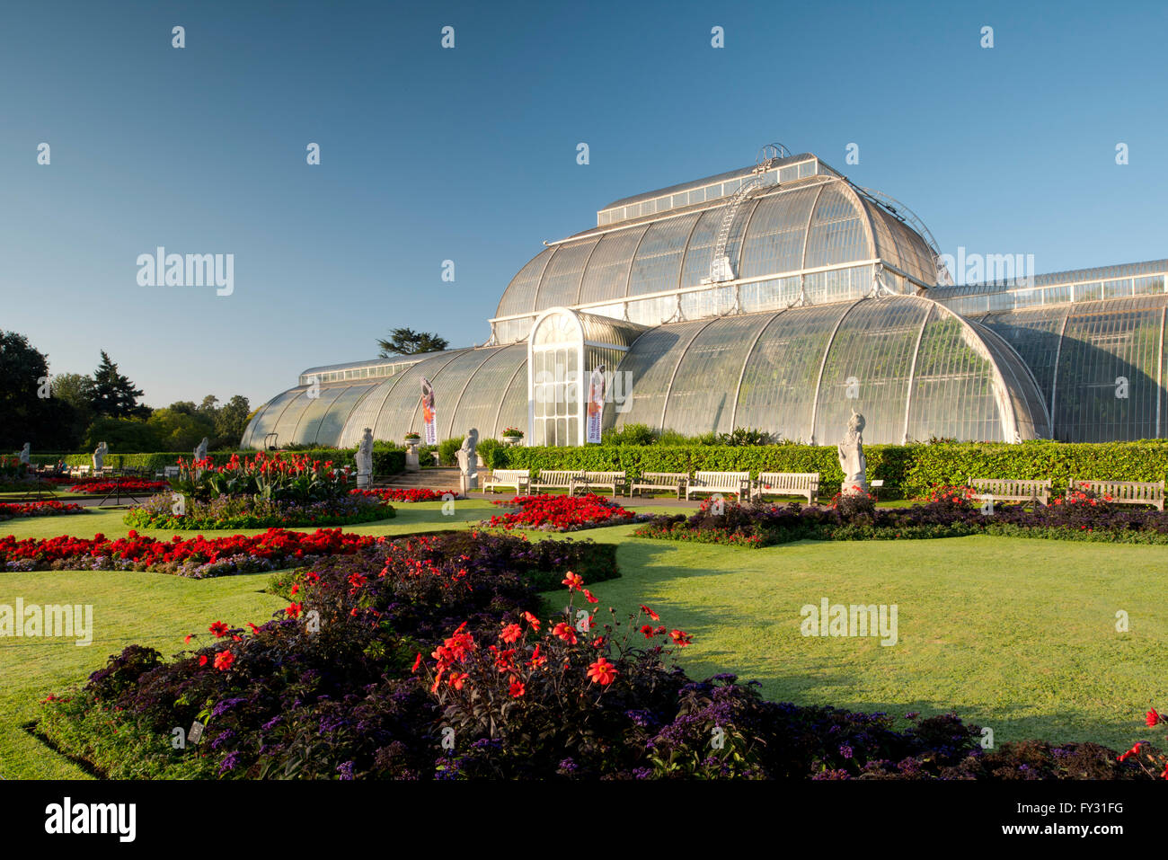Dahlia 'Bishop of Llandaff' and Heliotropium arborescens 'Marine' in front of the Palm House at - Stock Image